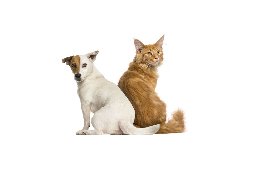 are jack russells good with cats