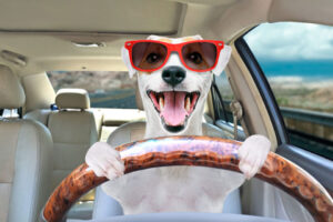 best dog car seats jack russells