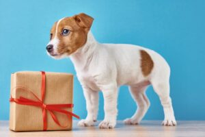best personalized gifts for jack russells