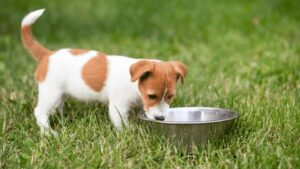 can dogs drink distilled water