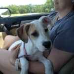 Adopt a Jack Russell - Coconut