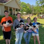 Adopt a Jack Russell - Lab  Jack Russell Pups
