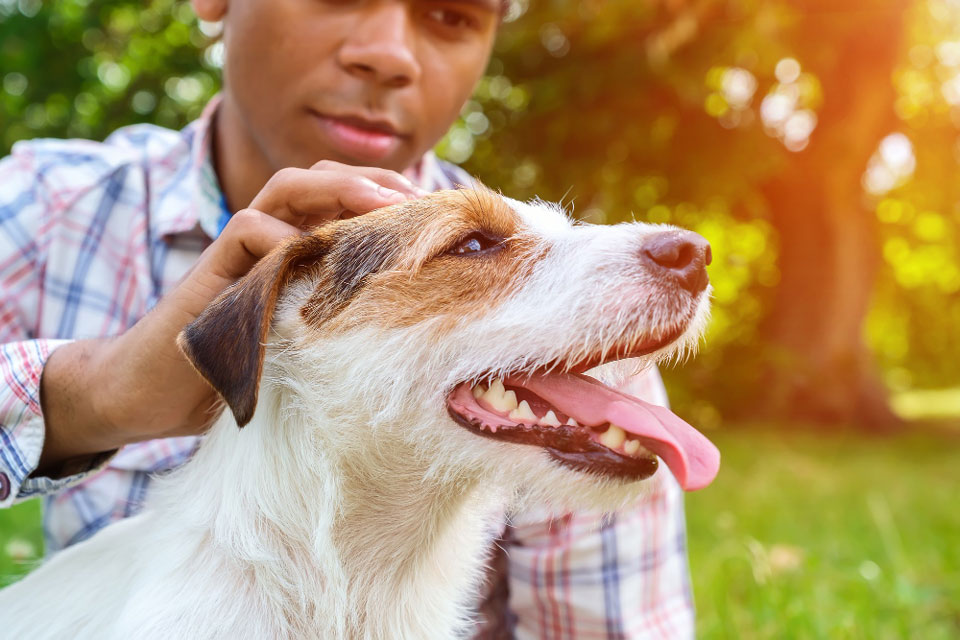 How Much Does A Jack Russell Cost?