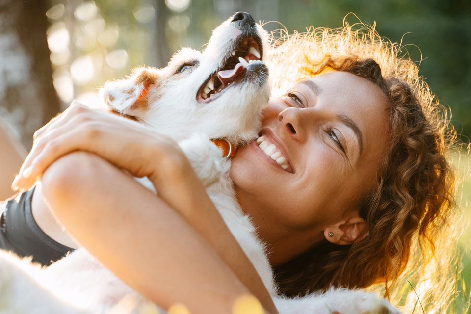 Are Jack Russells Good For First-Time Owners?